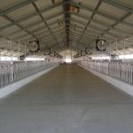 Kazachstan, DFP 1100 cows