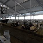 Kazachstan, DFP 500 cows