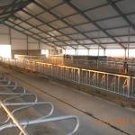 Kazachstan, DFP 750 cows
