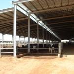 Sudan, DFP 1200 cows