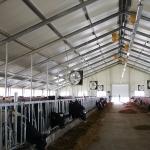 Uzbekistan, DFP 500 cows